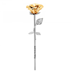 The gold rose